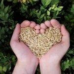 Potencia tu autoestima - semillas en forma de corazón